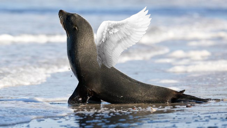 seal angel