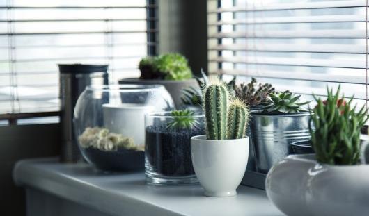 pots-716579_960_720[1]